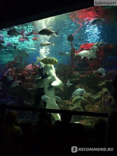 """Океанариум """"Нептун"""", Санкт-Петербург фото"""