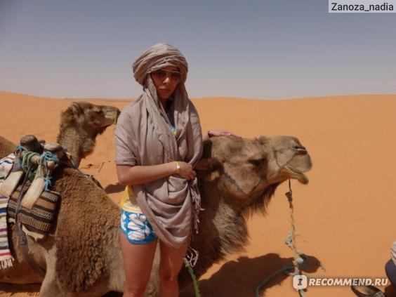 верблюд милаха