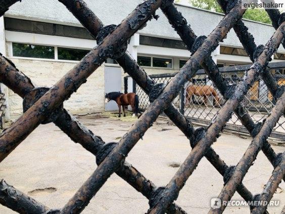 Ленинградский Зоопарк, Санкт-Петербург фото
