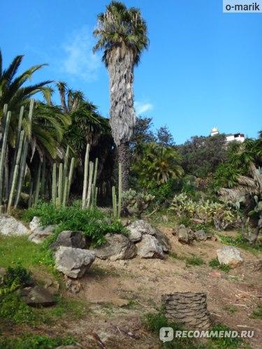 Парк Кактусов в Барселоне, Испания фото