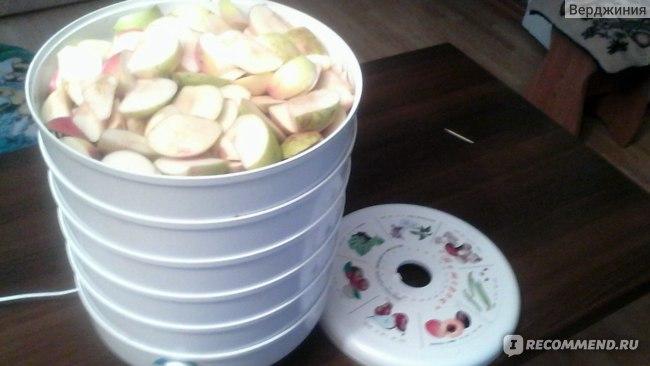 Электросушилка для овощей и фруктов Спектр-Прибор ЭСОФ-0.5/220 Ветерок повышенной производительности фото