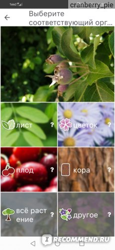 Компьютерная программа PlantNet Plant Identification фото