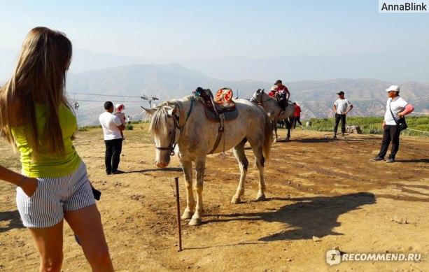 Можно покататься на лошадках и на канатной дороге