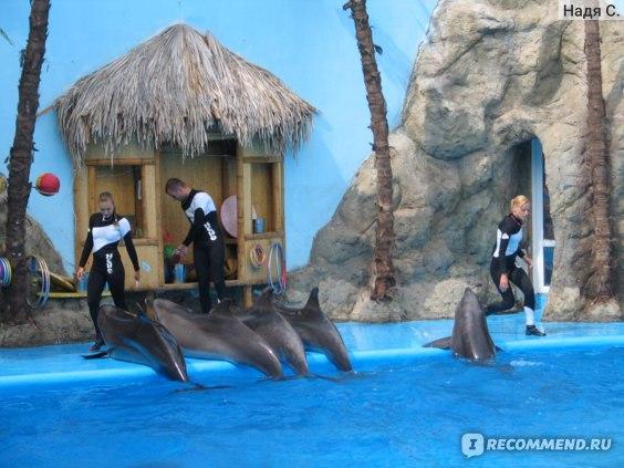 "Дельфинарий ""Немо"", Одесса фото"