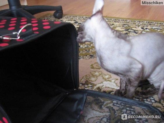 вкусная сумочка