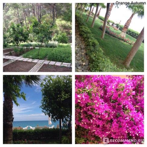 Amara Dolce Vita Luxury 5*, Турция, Кемер, п. Бельдиби фото
