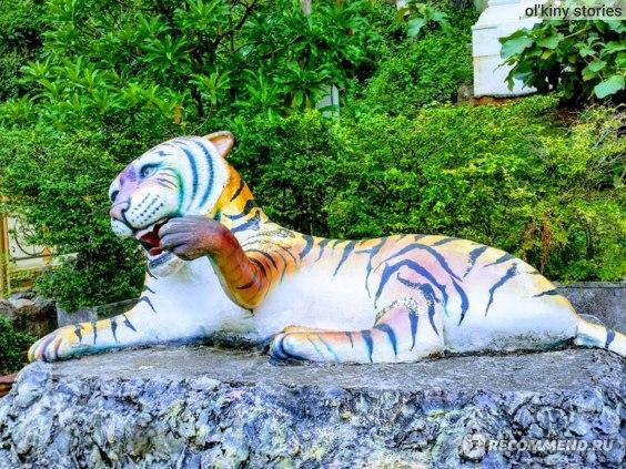 Тигр у подножия скалы Tiger Cave Temple перед подъемом