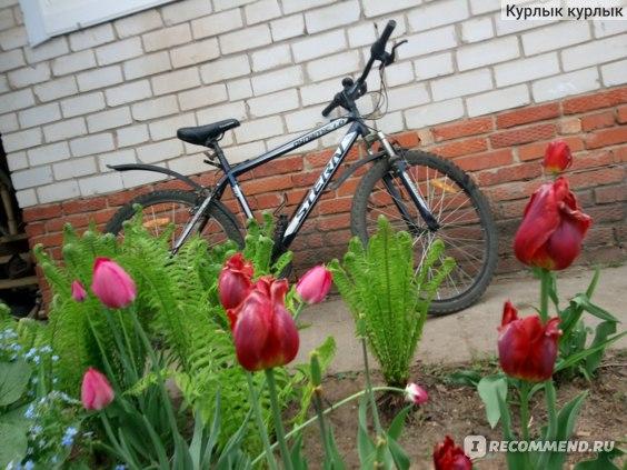 Велосипед Stern  Dynamic 1.0 фото