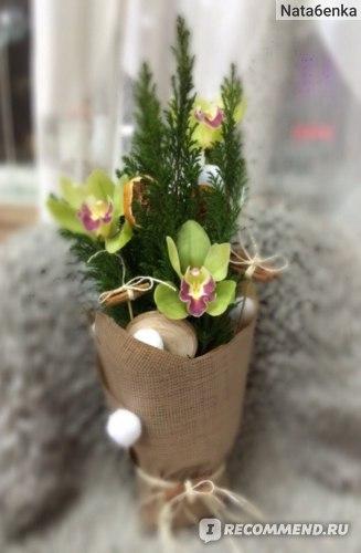 Кипарис (лат. Cupressus)  фото