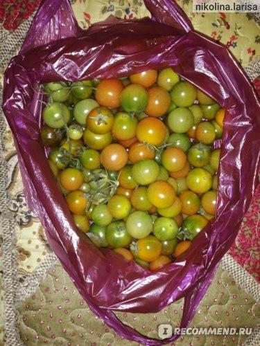 Помидоры черри   (томаты) фото
