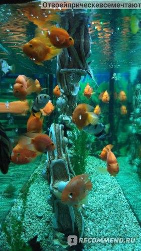 Евпаторийский аквариум, Евпатория, Крым фото