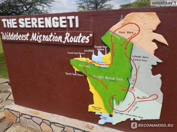 План миграции животных