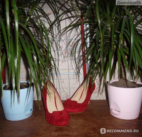 Туфли Kari Tomasso Taccardi с бантиком фото