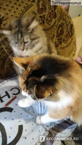 Лакомство для кошек B&B Allegro Cat жевательные колбаски  фото