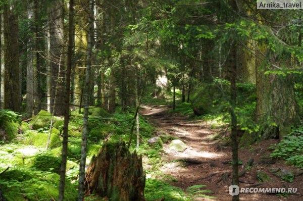 Тропинка, уходящая в лес