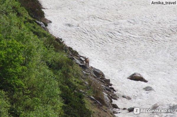 Не просто так Турье озеро имеет такое название - неожиданно к нам выбежал горный Тур, поглазеть на нас)