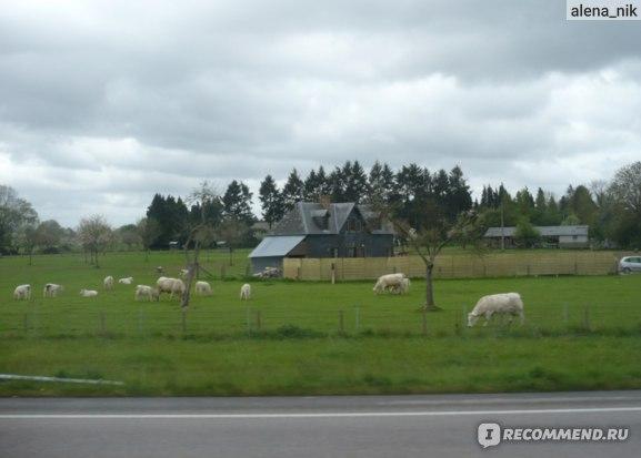 По дороге в Онфлёр. Типичный пейзаж Нормандии.