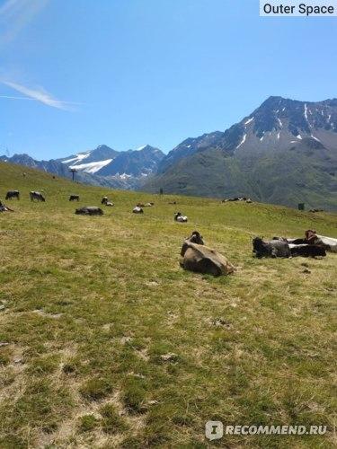 Тироль, альпийские Милки