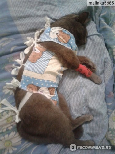 Услуги ветклиник  Энтеротомия у животных с целью удаления инородного тела фото