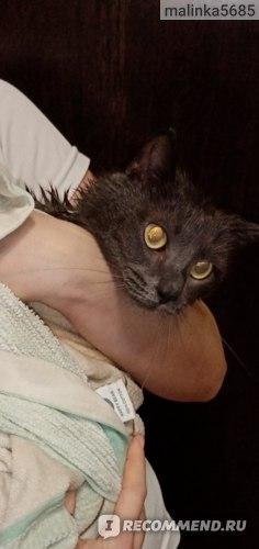 Шампунь Levrana Для собак и кошек всех пород Без аромата фото