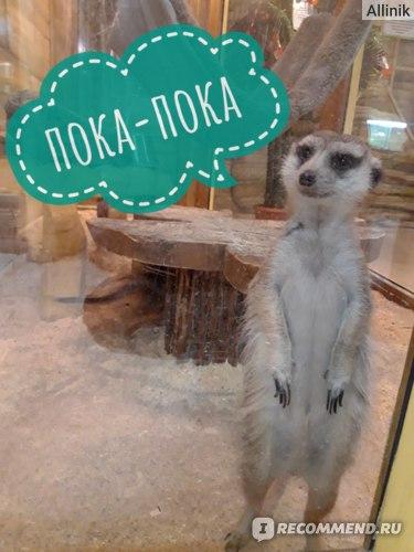 """Контактный зоопарк """"Лесное посольство"""", Уфа фото"""