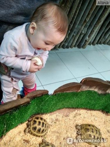 Ребенок впервые видит черепашек