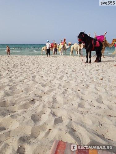 тунис джерба отель байя бич аквапарк