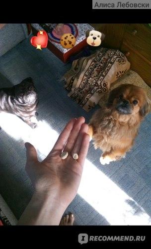 Ветеринарный препарат Zoetis Симпарика фото