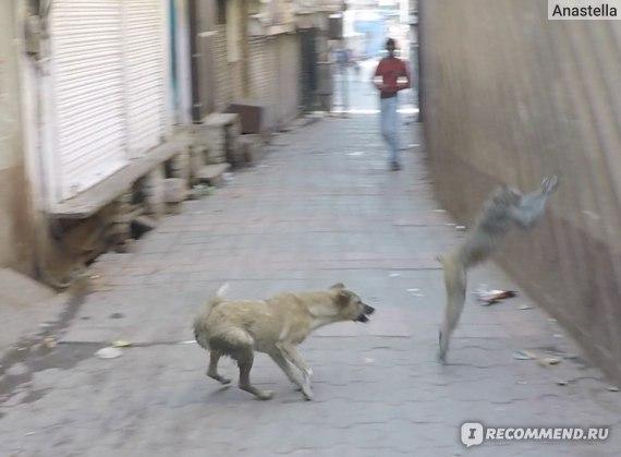 Собака и обезьяна около Храма Маданамоханы