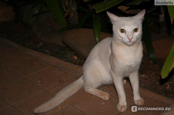 На территории отеля живут коты. Taj Exotica, Гоа, Индия.