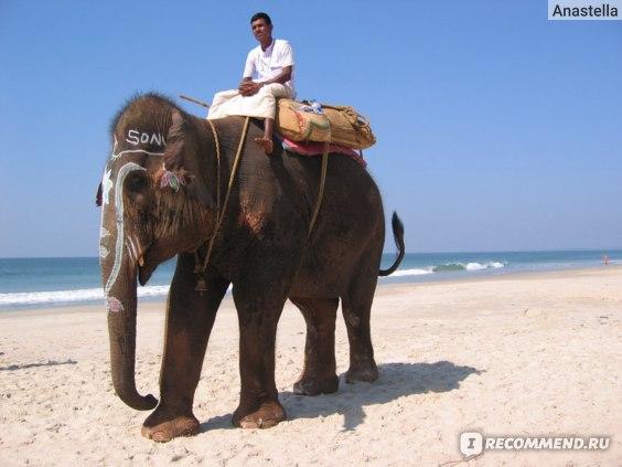 Можно покататься на слоне. Пляж Бенаулим. Гоа. Индия.