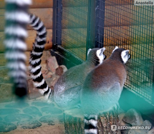 Зоопарк Лимпопо, Нижний Новгород фото