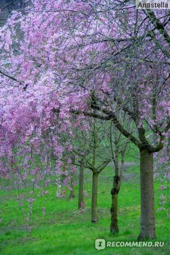 Весна в королевском саду в парке влюбленных Петрин. Прага.