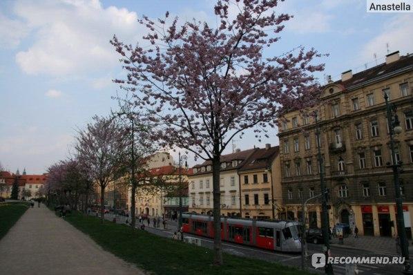 Новый трамвай. Прага.