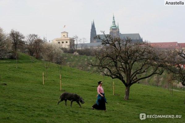 Пражанка с собакой. Парк Петрин. Прага.