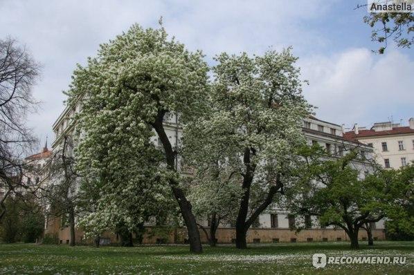 Ваяновы Сады. Мала Страна. Прага.