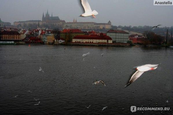 Чайки и Пражский Град