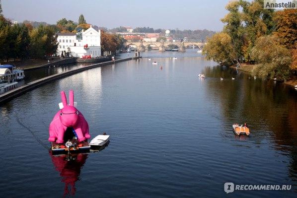Розовый заяц на реке Влтава. Прага.