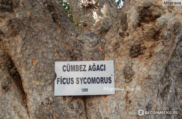 Фамагуста (город - призрак), Кипр фото