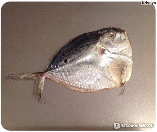 Вомер луна-рыба