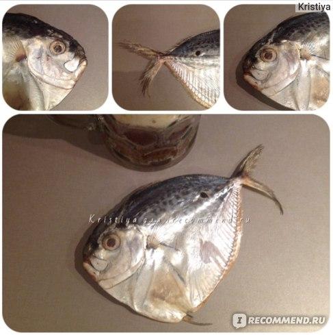 Рыба Вомер вяленый фото
