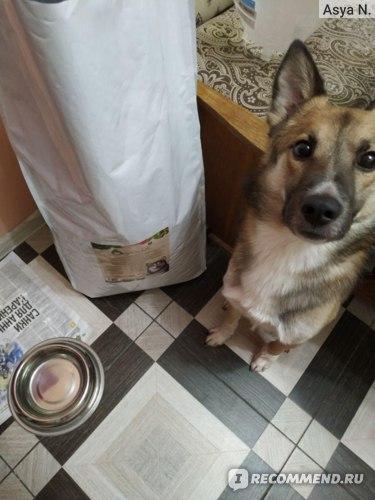Сухой корм для взрослых собак Organix с индейкой для чувствительного пищеварения, Adult Dog Turkey фото