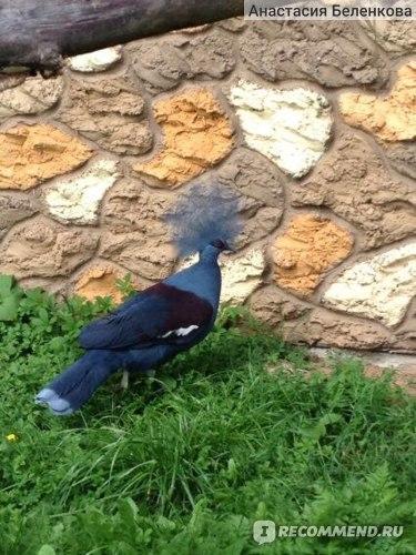 Красивая птица)))