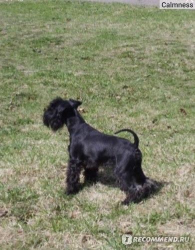 Наша собака по молодости