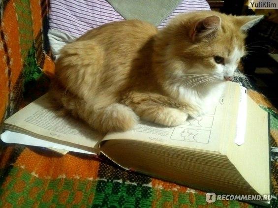 Лечебный кот повышает квлифиуацию посредством  впитывает знания