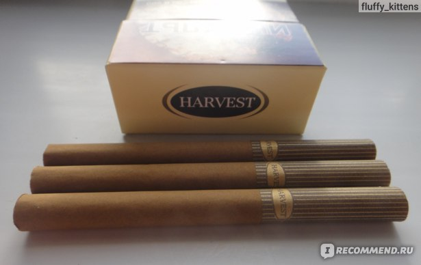harvest сигареты виды