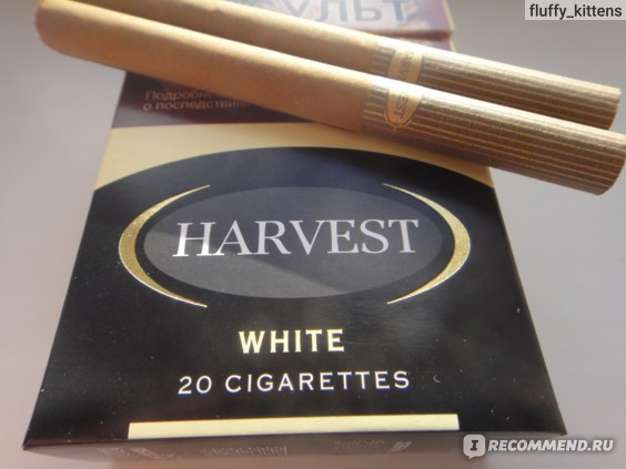 harvest сигареты вкусы
