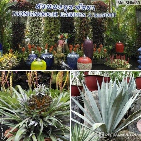 третья фотка,это фото кактуса из которого делают текилу))