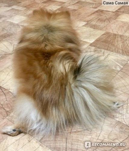 Лечение мочеполовой системы Api-San  Стоп-цистит таблетки для собак фото