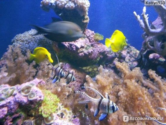 движущиеся рыбки